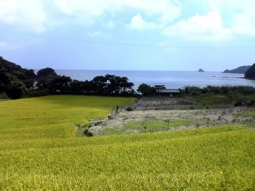 稲穂の海の向こうに広がる海