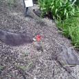 アフリカの赤い花