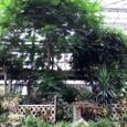 熱帯の植物