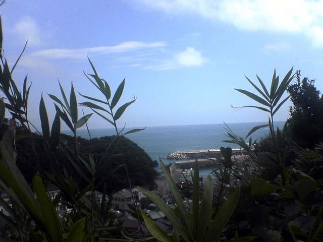 笹の隙間から見える志和岐漁港