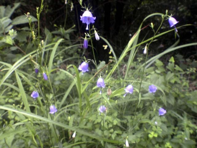 かわいらしい花が 其の2